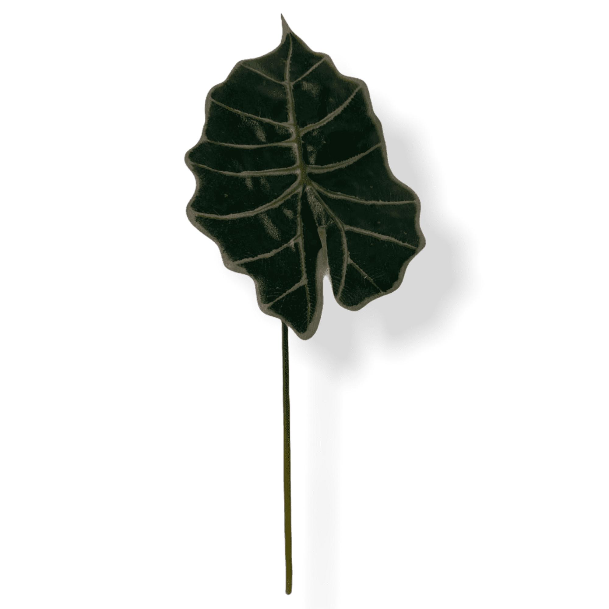 """Elefantenohr """"Tessia"""" - dunkelgrün"""