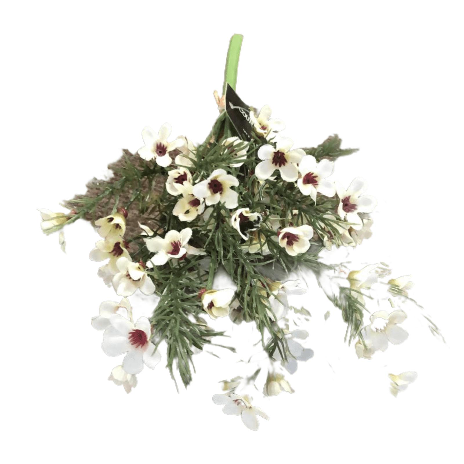 Moss-Steinbrech - weiß