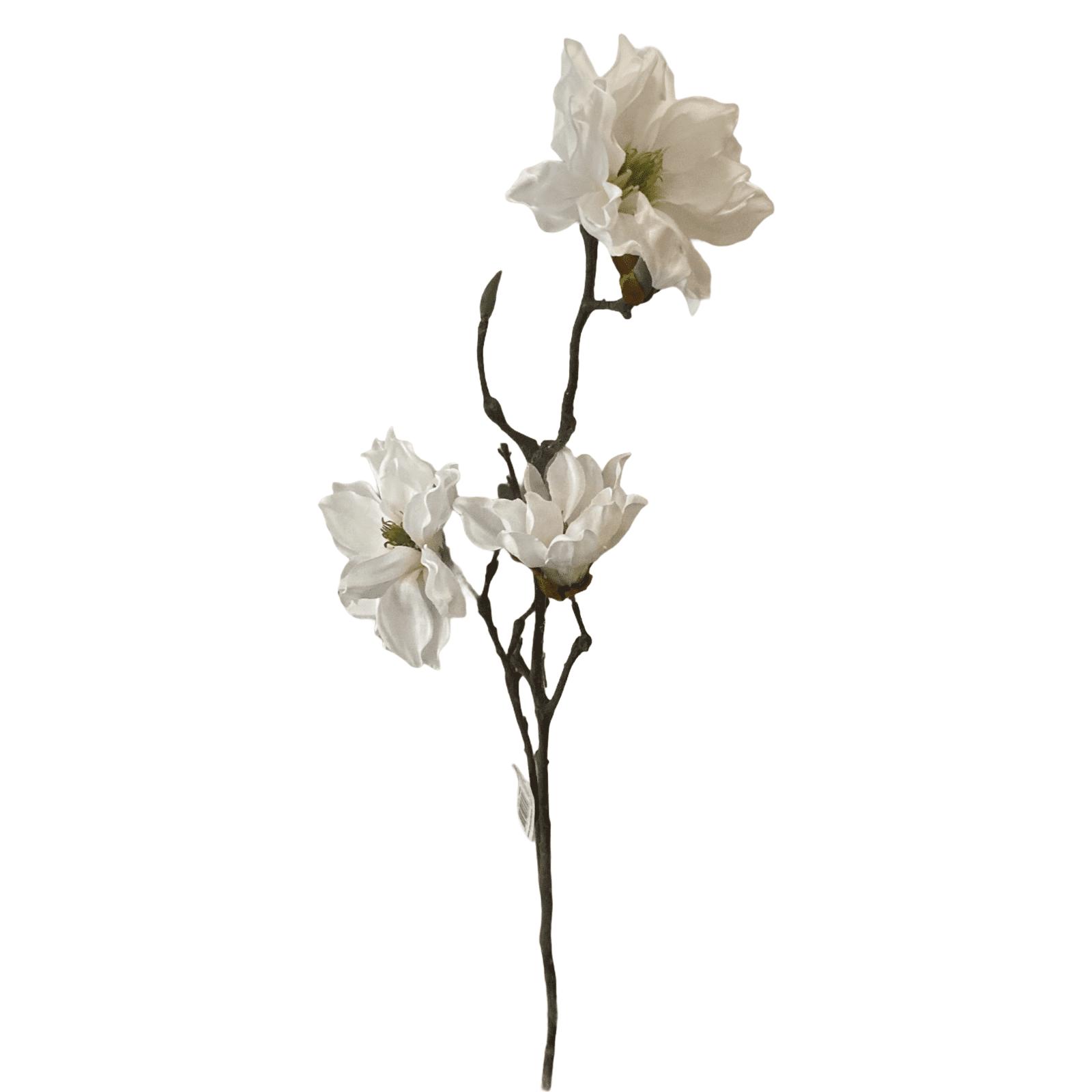 Weißer Magnolienstrauch