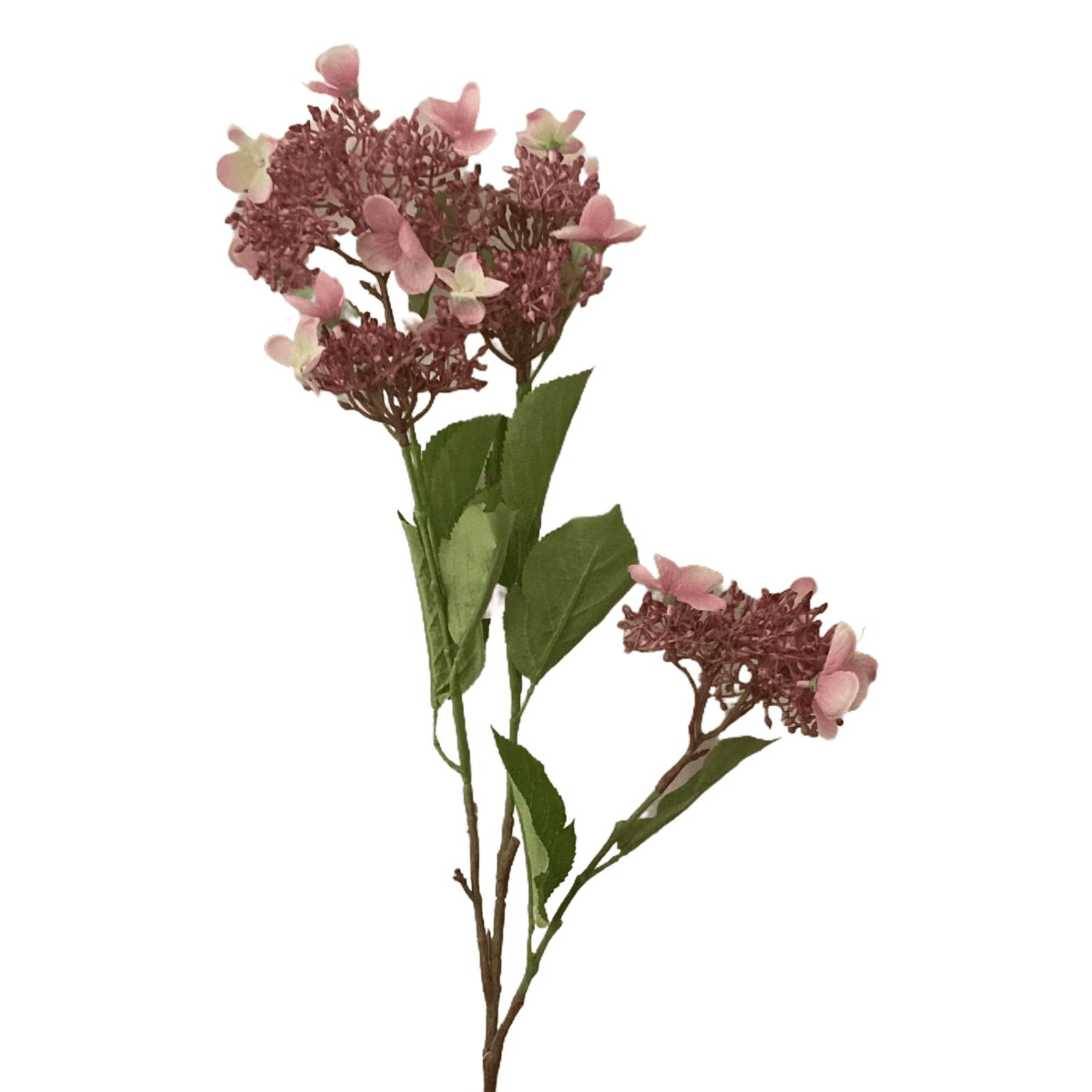Hortensie  rosa